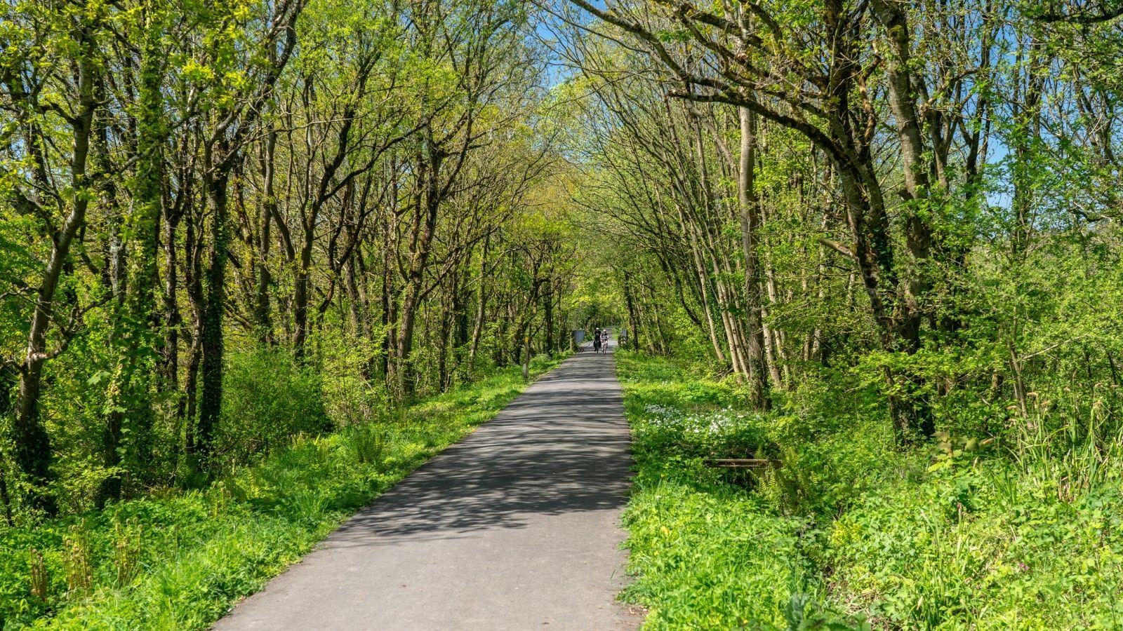 UKC4H_Tarka-Trail