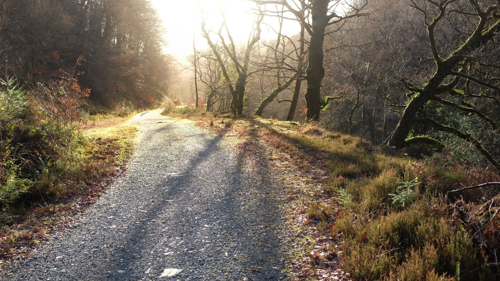 UKC4H_Yr-Afron-Trail--Coed-y-Brenin